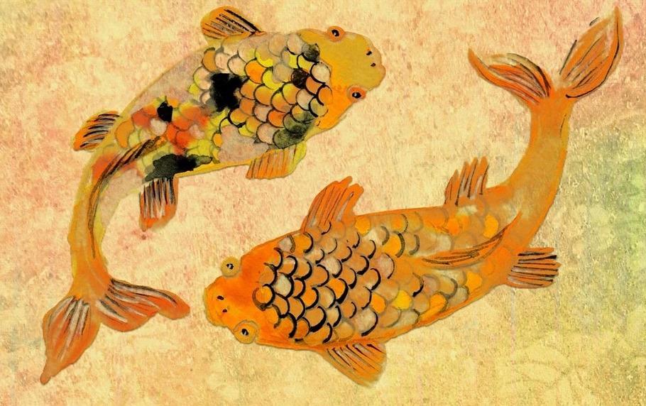 fish-1283408_1920